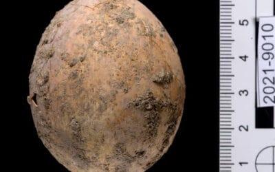 Tijdens opgravingen in Yavne werd een 1.000 jaar oud ei gevonden