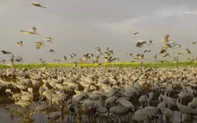 Hula Vallei Reservaat