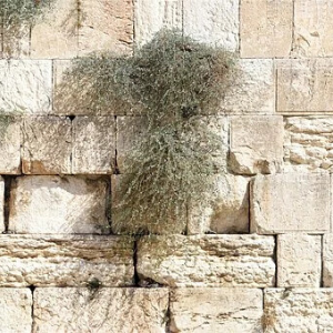 Het Hebreeuws Letterverhaal: 30 (slot) TAW