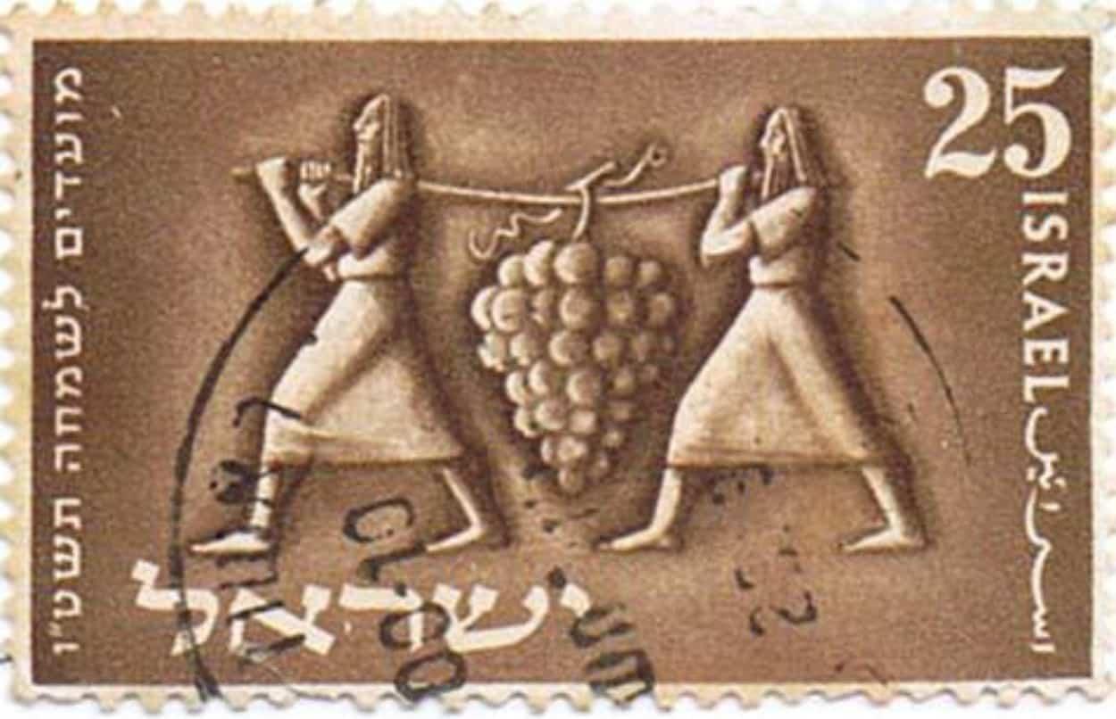 Parashat Sjelach